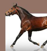 Animaroo horse