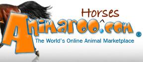 Horses - Animaroo